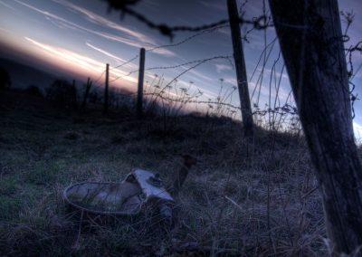 Weide bei Nacht